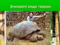 Зникаючі види тварин