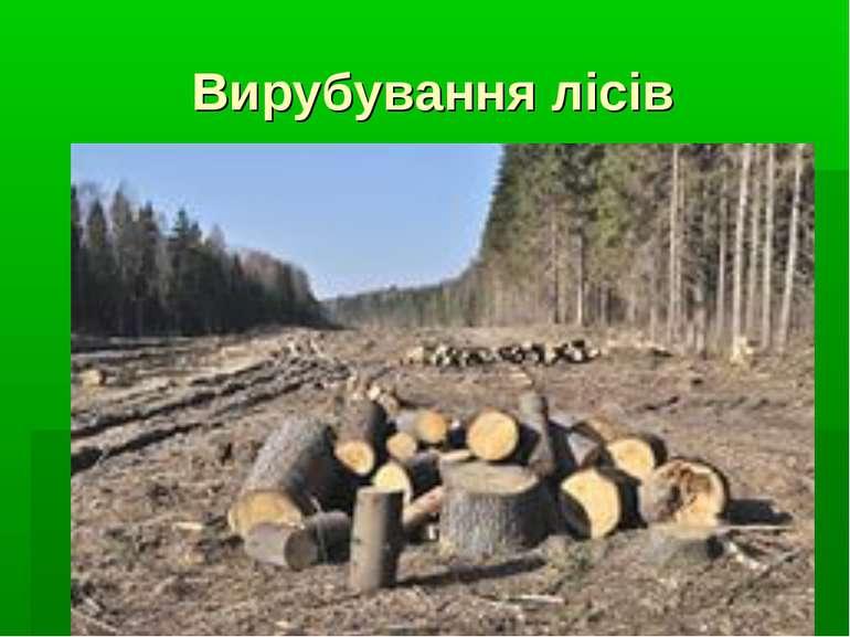 Вирубування лісів