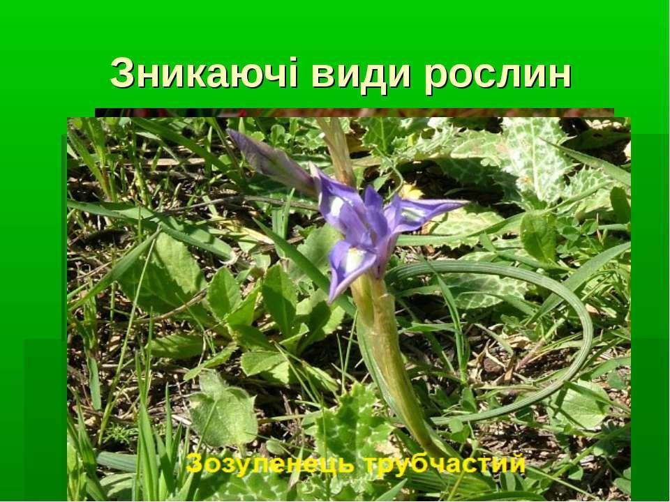 Зникаючі види рослин