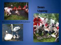 Swan Upping What sentences correspond to these pictures?