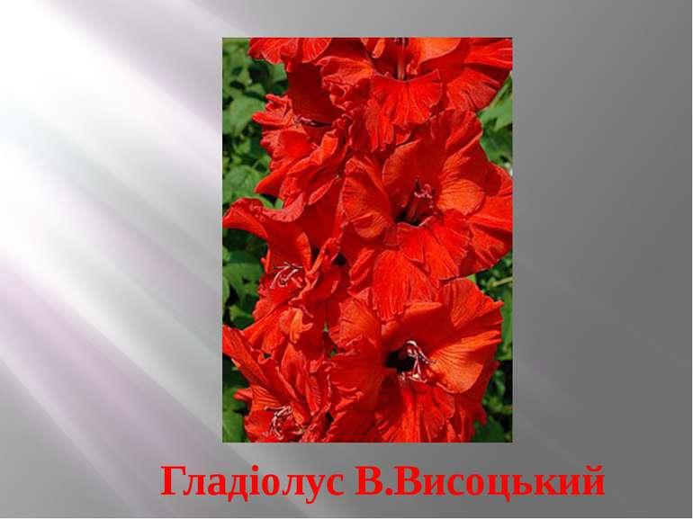 Гладіолус В.Висоцький