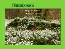 Горицвіт весняний Пшінка весняна Медунка Мати й мачуха