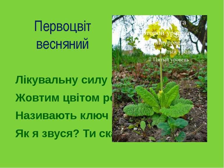Первоцвіт весняний Лікувальну силу маю, Жовтим цвітом розцвітаю. Називають к...