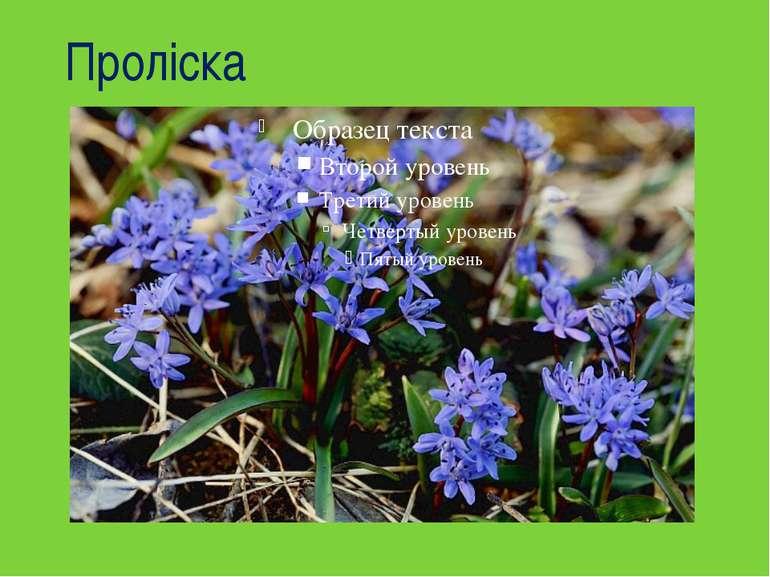 Проліска Я найперша розквітаю Синім цвітом серед гаю, Відгадайте, що за квітк...