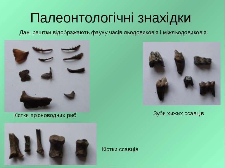Палеонтологічні знахідки Зуби хижих ссавців Кістки прісноводних риб Кістки сс...