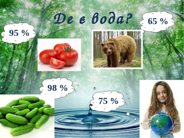 Де є вода? 95 % 98 % 65 % 75 %