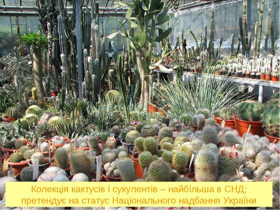 Колекція кактусів і сукулентів – найбільша в СНД; претендує на статус Націона...
