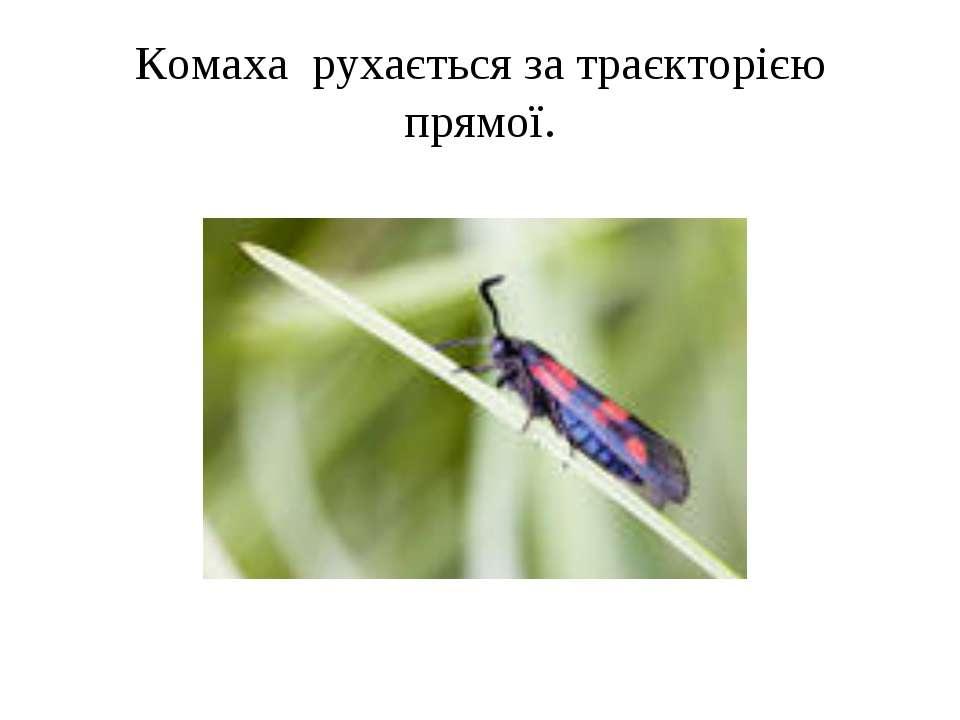 Комаха рухається за траєкторією прямої.