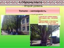 Тополя – непокірність І зелений світ побілів навкруг: Ніби в давнє слід – топ...