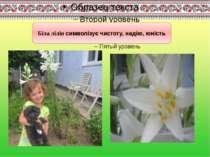 Біла лілія символізує чистоту, надію, юність