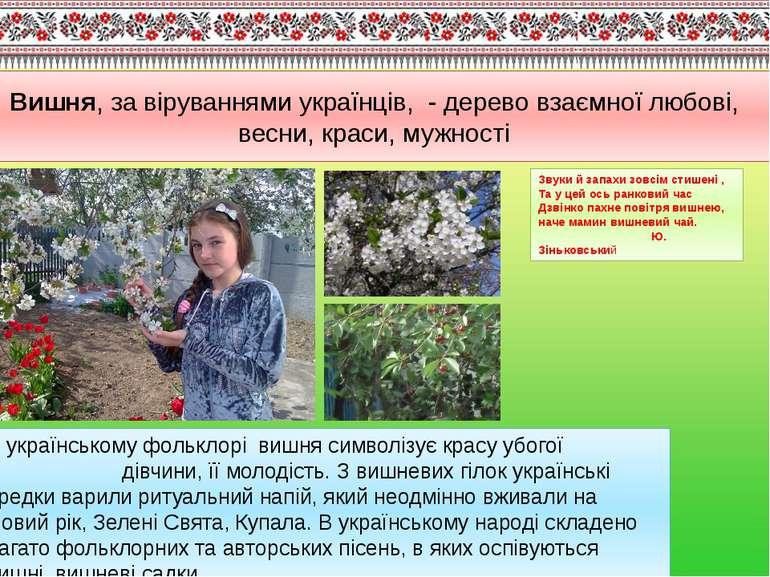 В українському фольклорі вишня символізує красу убогої дівчини, її молодість....