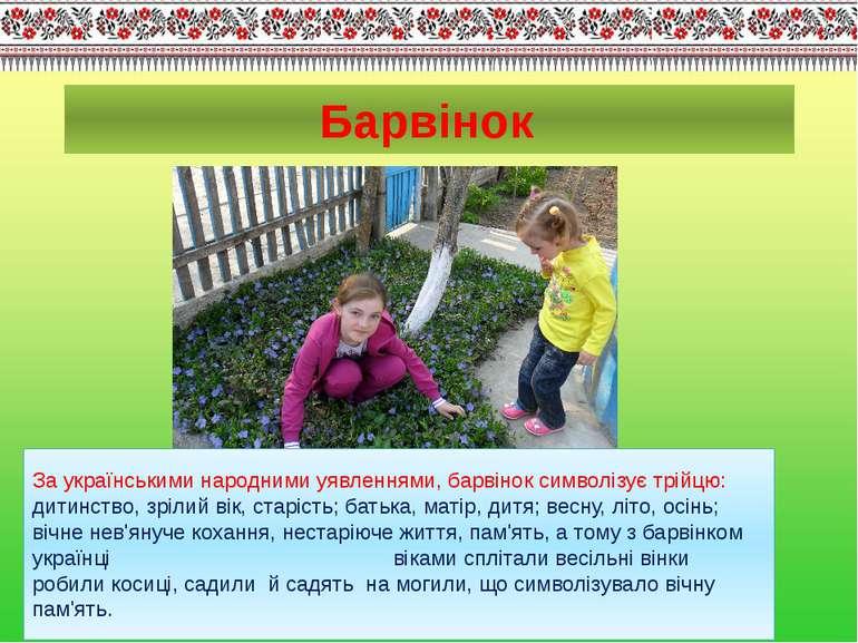 За українськими народними уявленнями, барвінок символізує трійцю: дитинство, ...