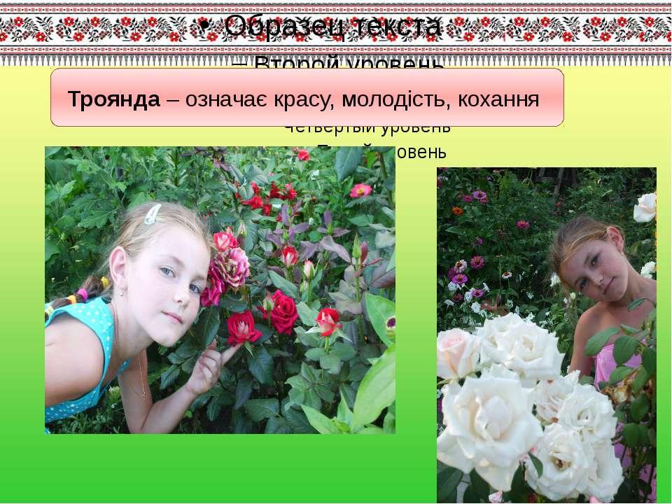 Троянда – означає красу, молодість, кохання
