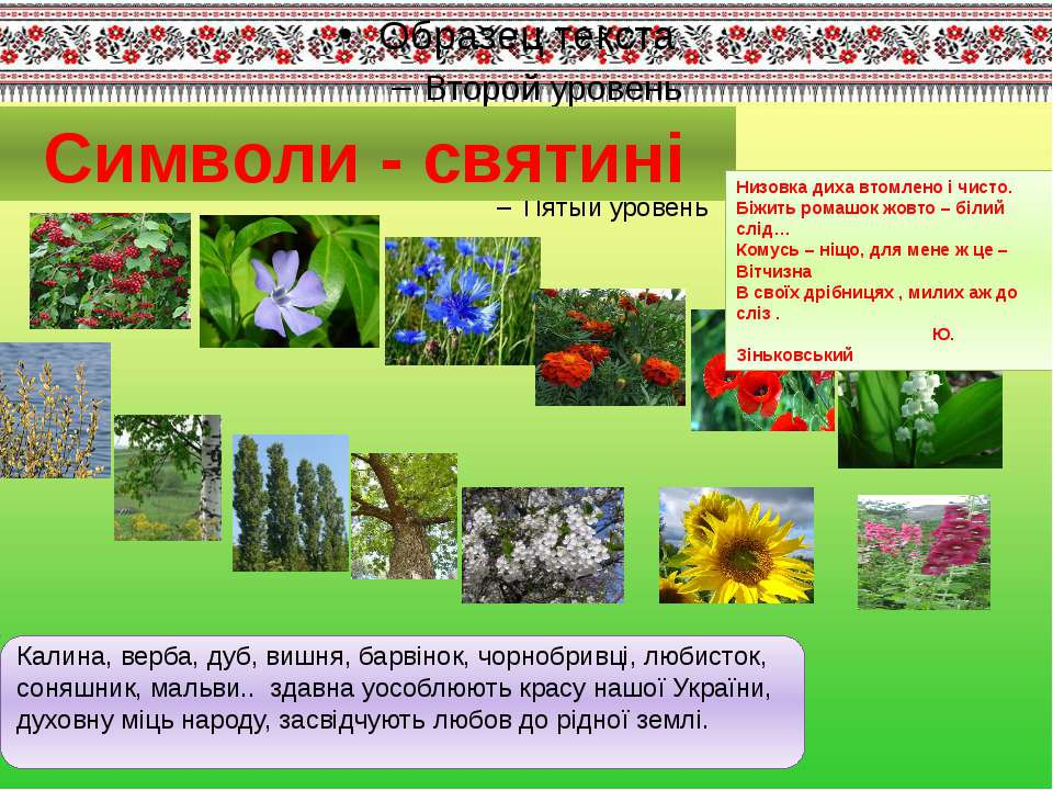 Символи - святині Калина, верба, дуб, вишня, барвінок, чорнобривці, любисток,...