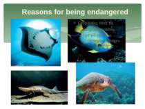 Reasons for being endangered