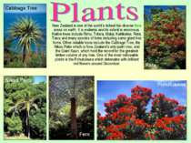 New Zealand is one of the world's richest bio-diverse flora areas on earth. I...