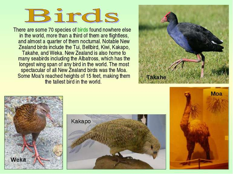There are some 70 species of birds found nowhere else in the world, more than...