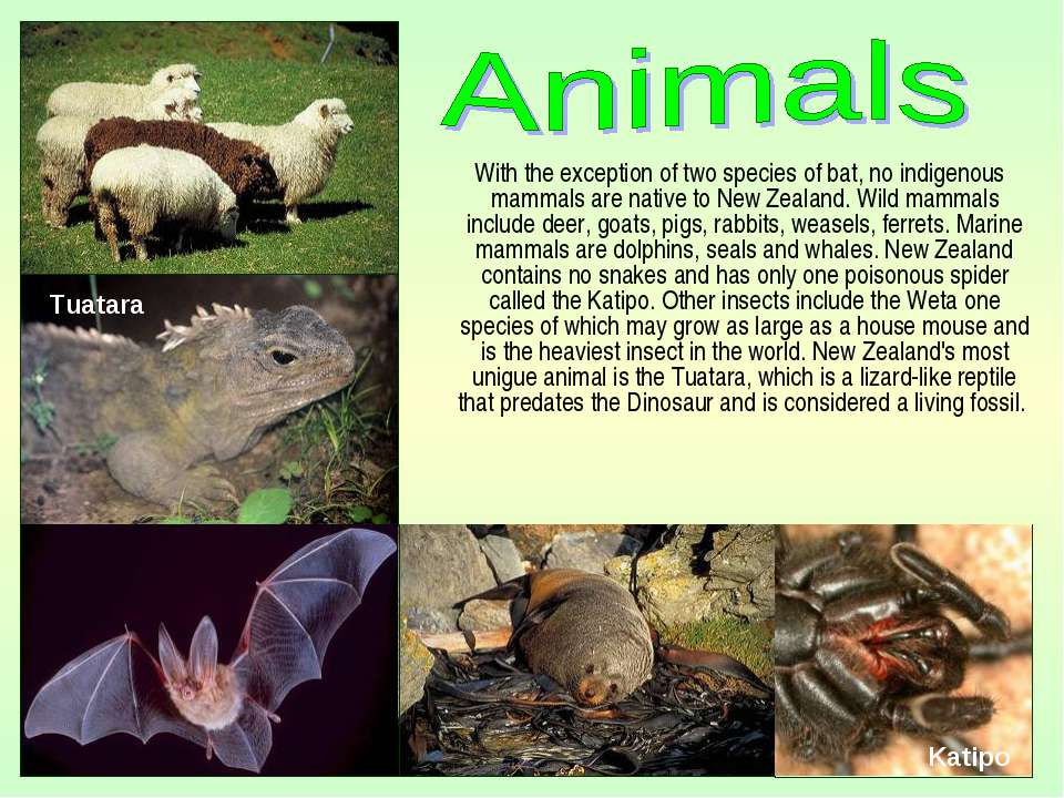 With the exception of two species of bat, no indigenous mammals are native to...