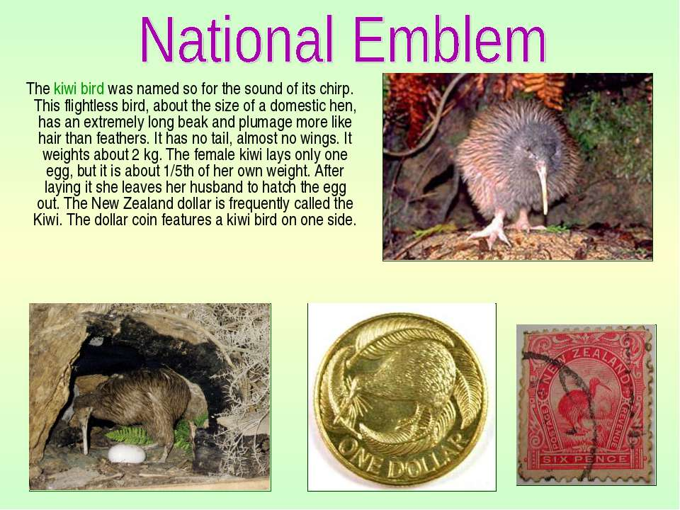 The kiwi bird was named so for the sound of its chirp. This flightless bird, ...
