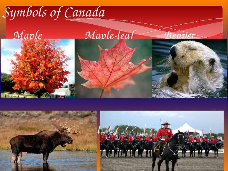 Symbols of Canada Maple Maple-leaf Beaver Elk Royal Canadian Mounted Police