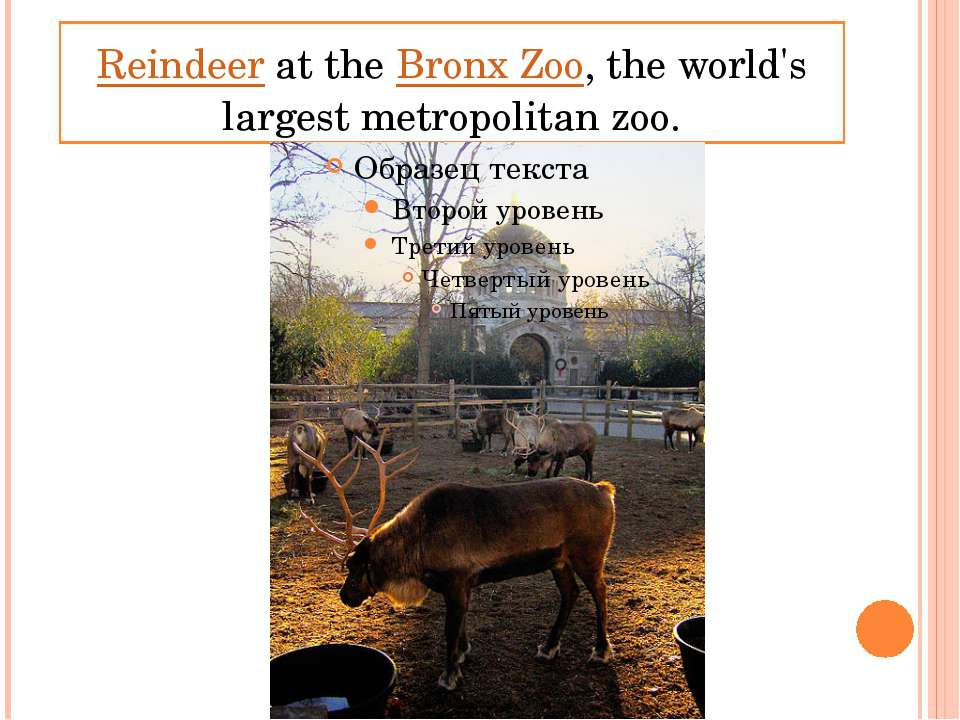 Reindeer at the Bronx Zoo, the world's largest metropolitan zoo.
