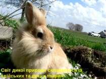 Світ дикої природи складається із свійських та диких тварин.