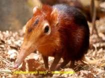 Найменший звір – землерийка