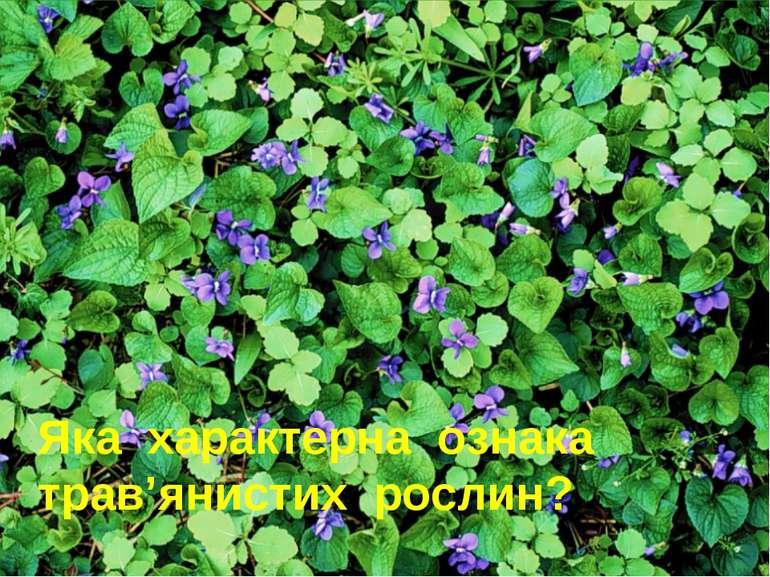 Яка характерна ознака трав'янистих рослин?