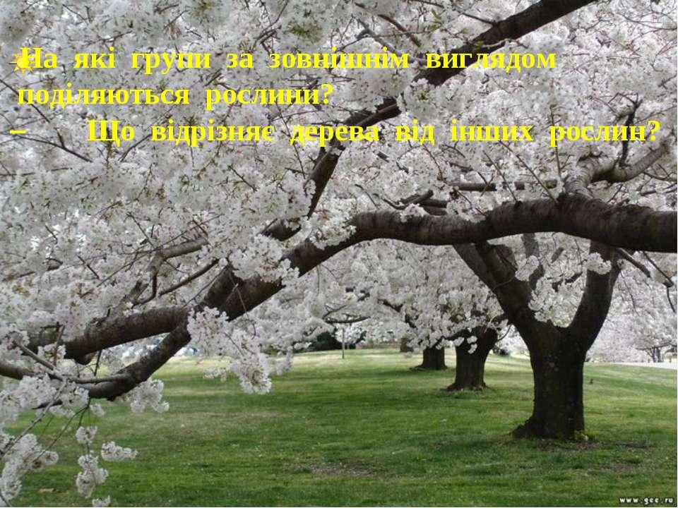 – На які групи за зовнішнім виглядом поділяються рослини? – Що відрізняє дере...