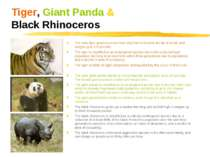 Tiger, Giant Panda & Black Rhinoceros The male tiger grows up to ten feet lon...