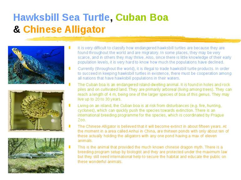 Hawksbill Sea Turtle, Cuban Boa & Chinese Alligator It is very difficult to c...