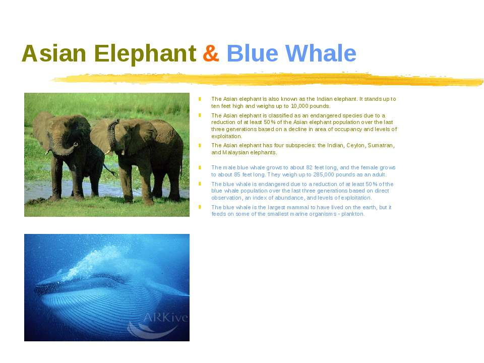 Asian Elephant & Blue Whale The Asian elephant is also known as the Indian el...