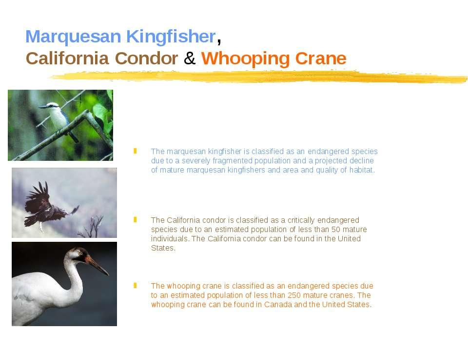 Marquesan Kingfisher, California Condor & Whooping Crane The marquesan kingfi...
