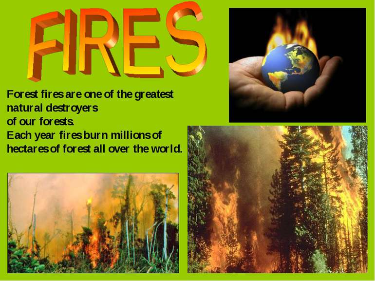 Forest fires are one of the greatest natural destroyers of our forests. Each ...