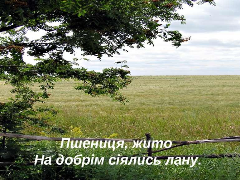Пшениця, жито На добрім сіялись лану.