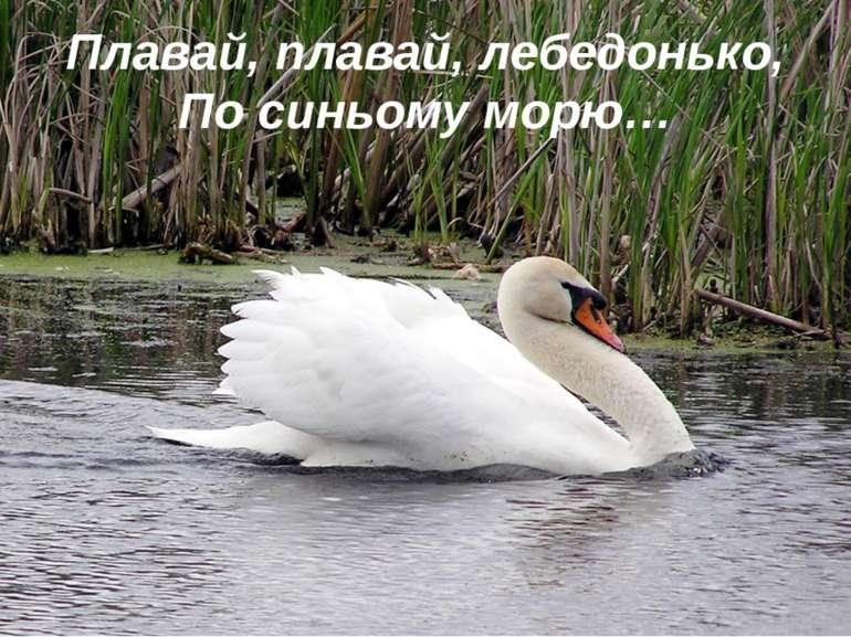 Плавай, плавай, лебедонько, По синьому морю…