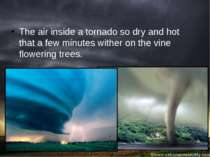 The air inside a tornado so dry and hot that a few minutes wither on the vine...