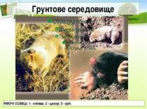 Грунтове середовище РИЮЧІ ССАВЦІ: 1 - сліпиш; 2 - цокор; 3 - кріт.