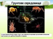 Грунтове середовище У грунті мешкає безліч кліщів. Одні з них живляться мертв...