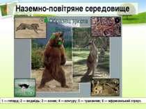 Наземно-повітряне середовище 1 — гепард; 2 — ведмідь; 3 — коник; 4 — кенгуру;...