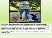 Водні тварини переміщаються у воді різними способами. Кінцівки риб представле...