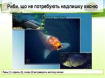 Риби, що не потребують надлишку кисню Линь (1), карась (2), сазан (3) витриму...