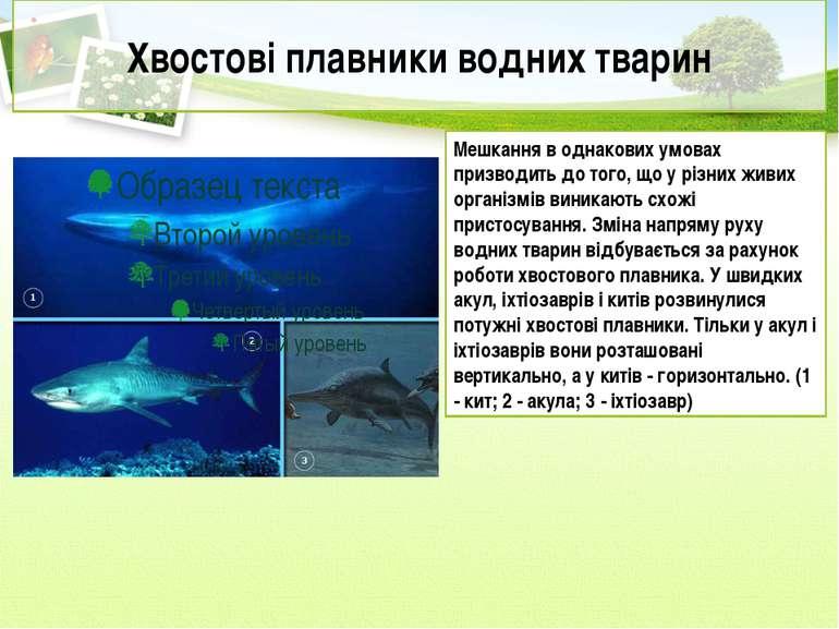 Хвостові плавники водних тварин Мешкання в однакових умовах призводить до тог...