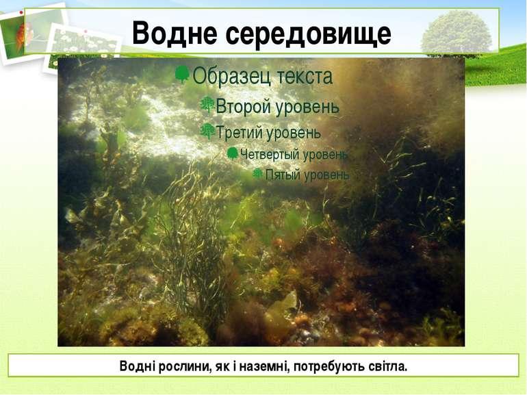 Водне середовище Водні рослини, як і наземні, потребують світла.