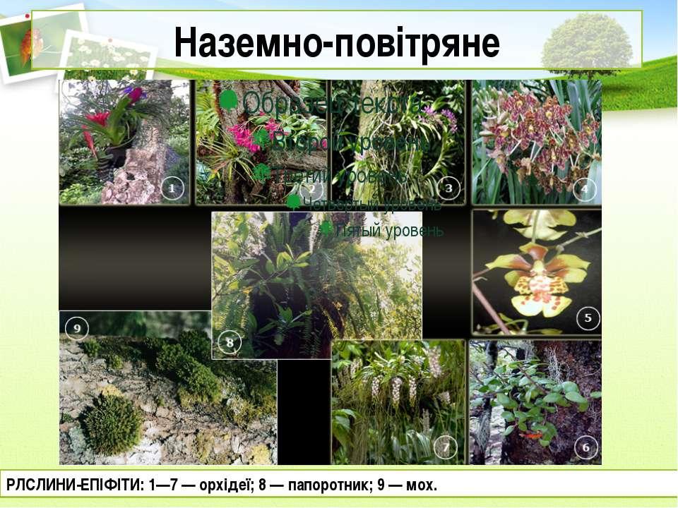 Наземно-повітряне РЛСЛИНИ-ЕПІФІТИ: 1—7 — орхідеї; 8 — папоротник; 9 — мох.