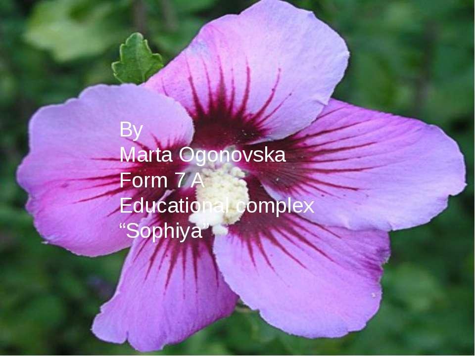 """By Marta Ogonovska Form 7 A Educational complex """"Sophiya"""""""