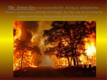 The forest fire is an uncontrolled fire burning in wildland areas. Common cau...
