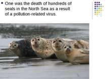 One was the death of hundreds of seals in the North Sea as a result of a poll...
