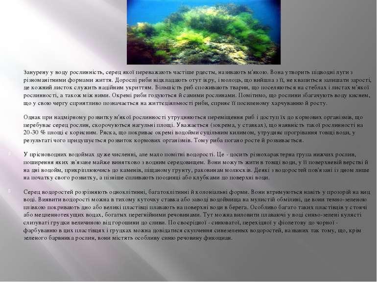 Занурену у воду рослинність, серед якої переважають частіше рдесты, називають...