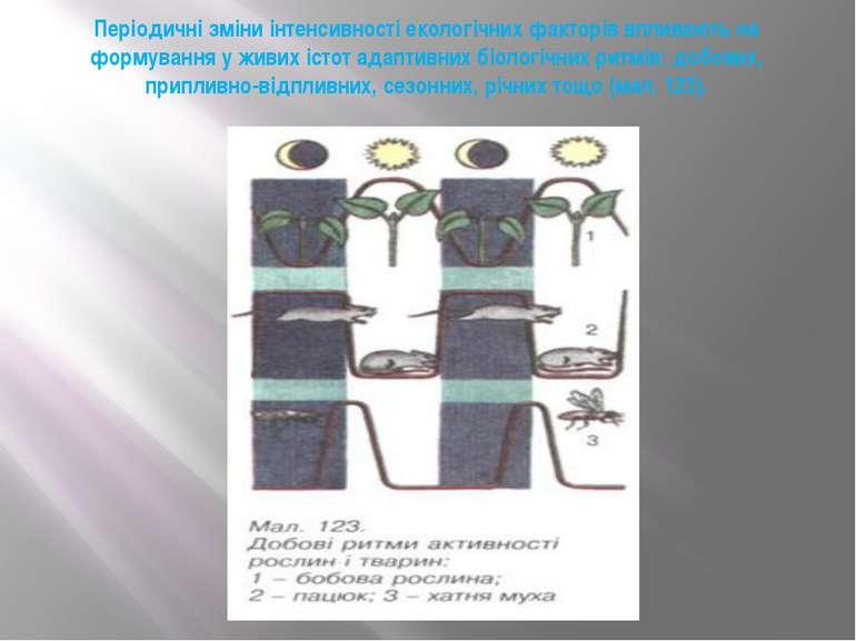 Періодичні зміни інтенсивності екологічних факторів впливають на формування у...